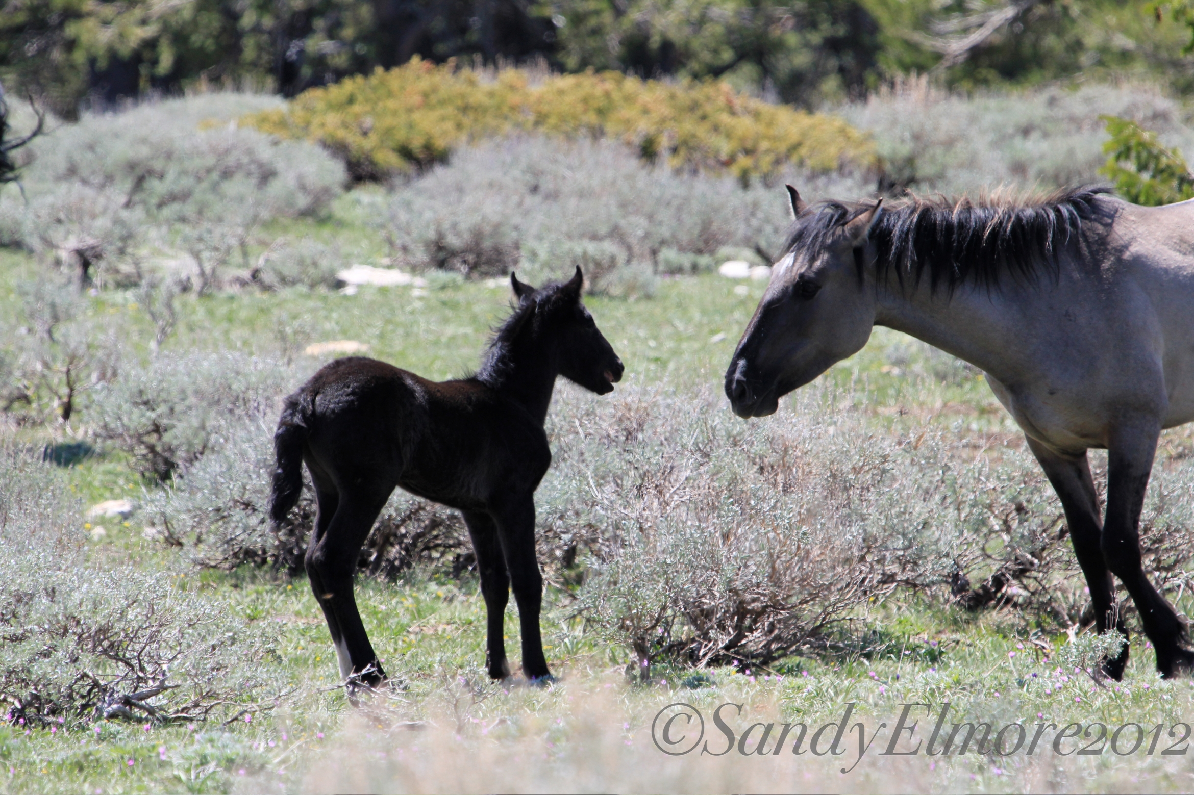 Demure's foal and Jenny, May 20, 2012
