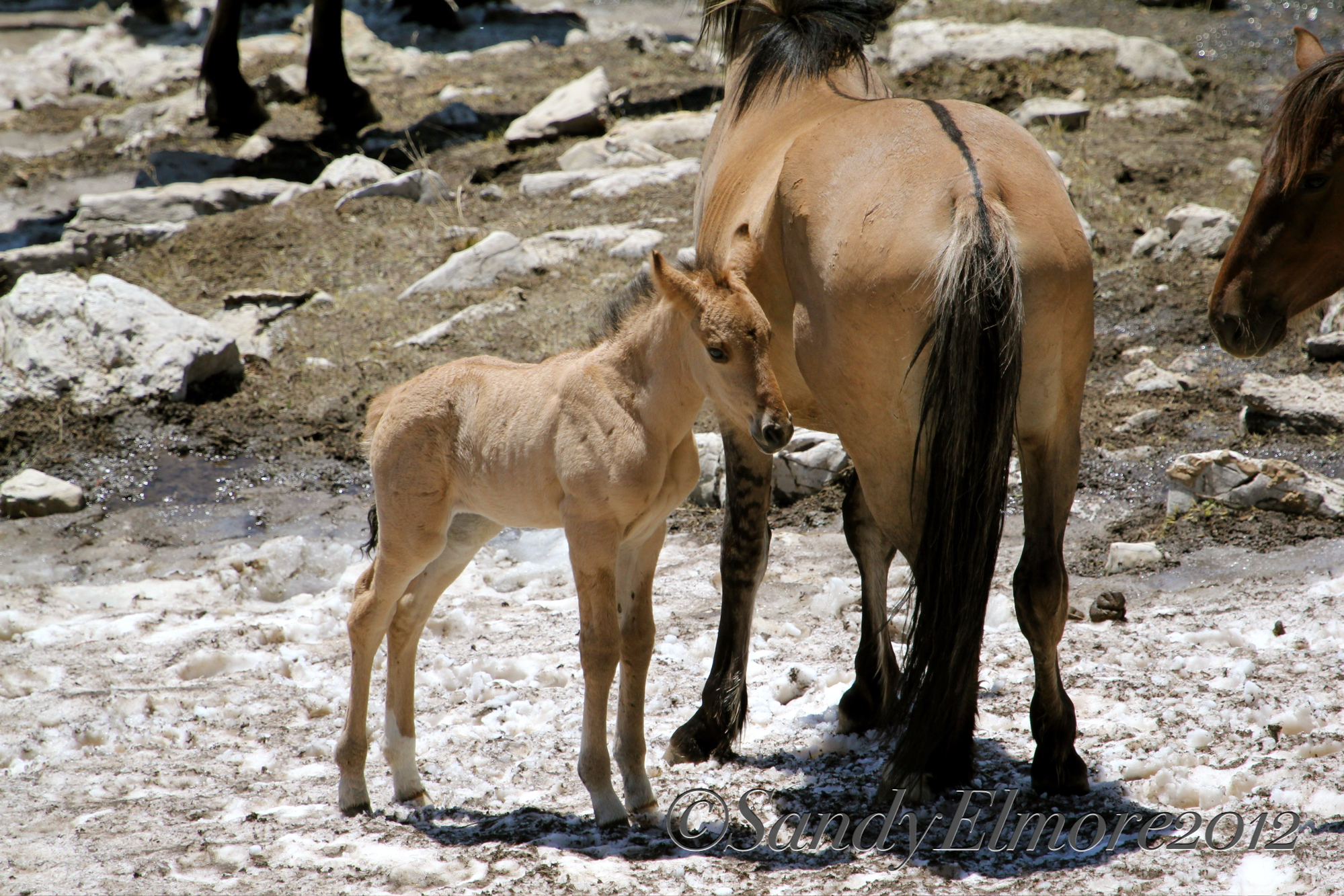 Kaycee and her new filly, June 18, 2012