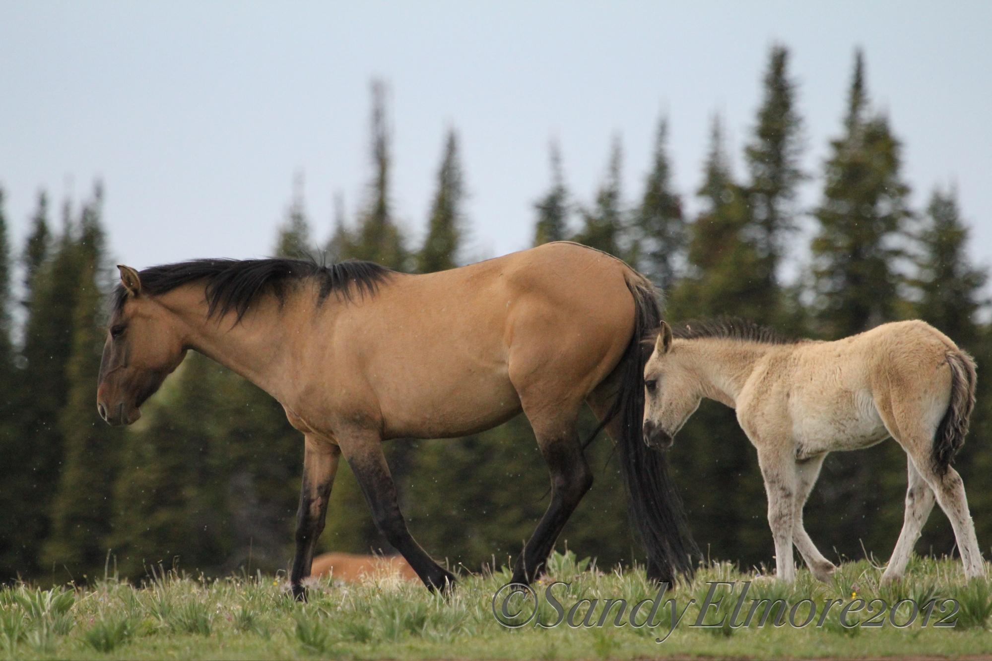 Juneau and Mendenhall, June 17, 2012