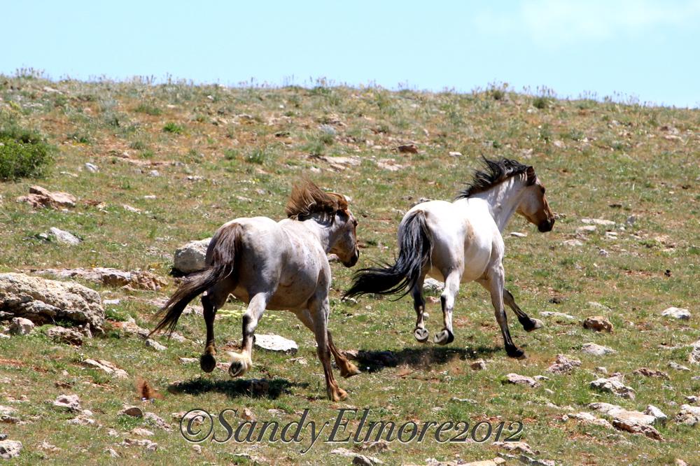 Tecumseh and Kalahari, July 2012