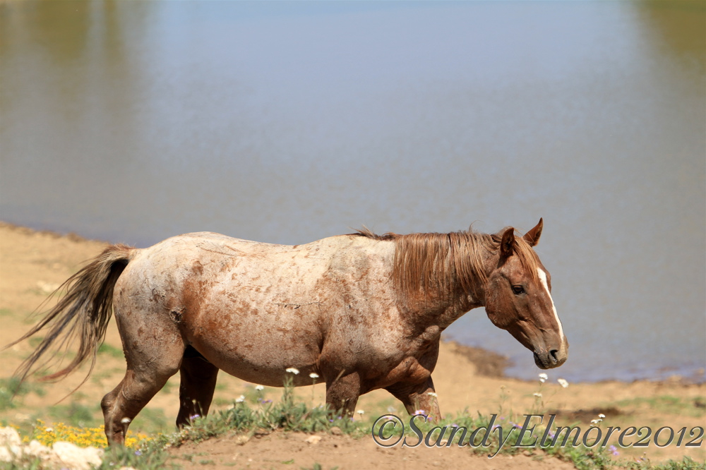 Tecumseh, July 31, 2012