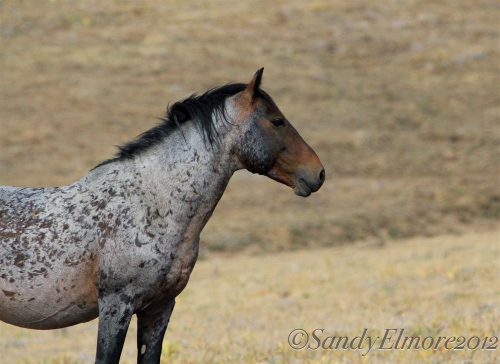 Custer, August 2012
