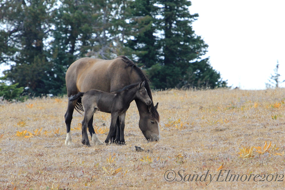 Dove and her filly, August 30, 2012