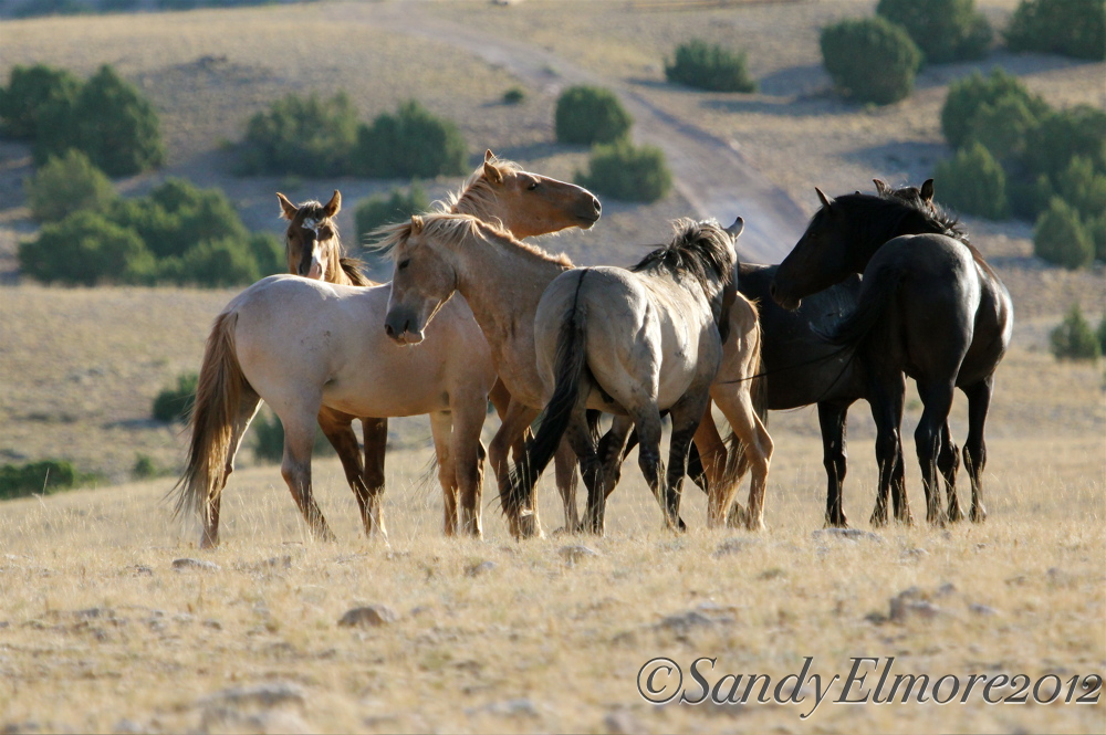 A bunch of Dryhead Bachelors and Durango, July 2012