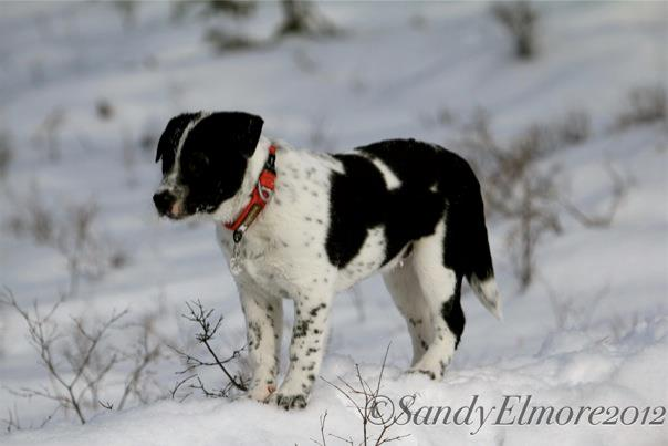 Jasper, December 2012