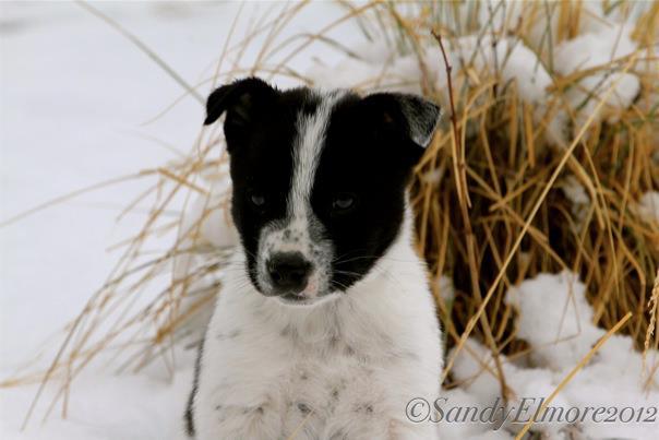Jasper, 6 weeks old.  October, 2012