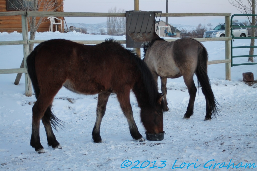Liesl and Kiabab