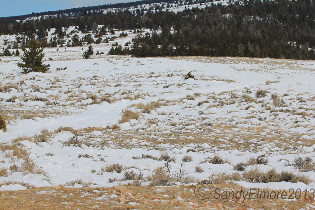 Cheyenne Flats, March 18, 2013