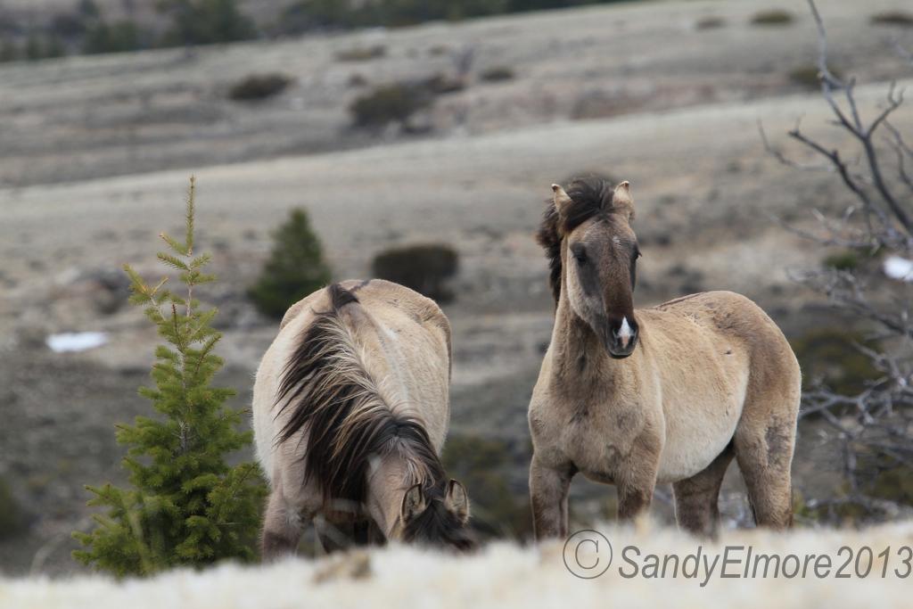 Fresia and Montana, April 2013