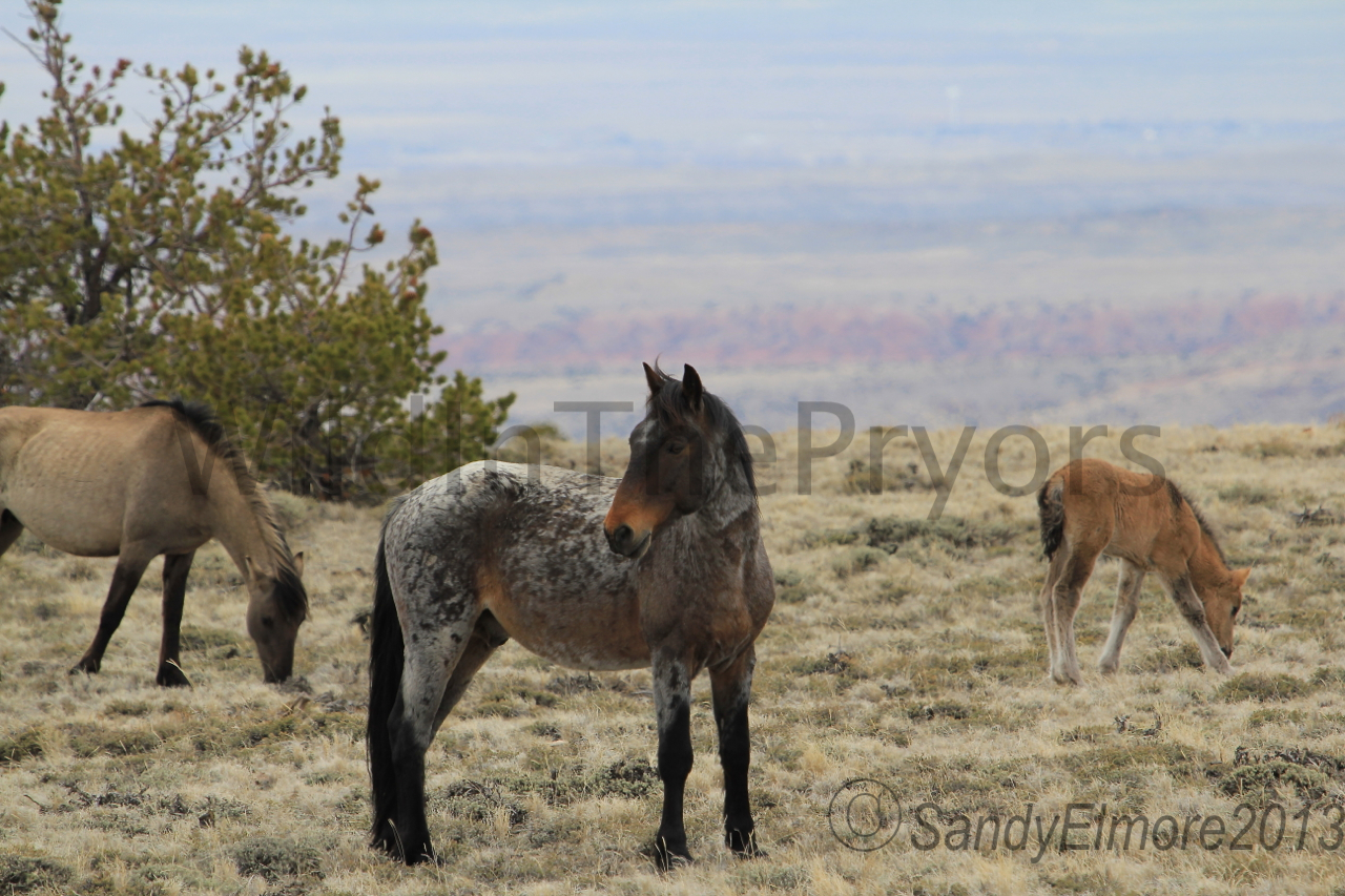 Custer, Fiasco and new Colt, April 28, 2013