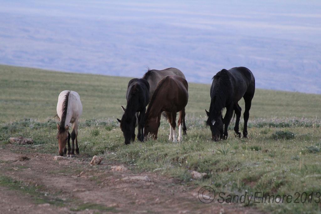 Knight, Kohl, Lakota and Grijala, July 2011