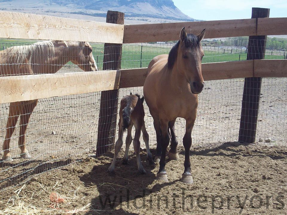 Kachina and her new colt.  Photo by Trisha H.
