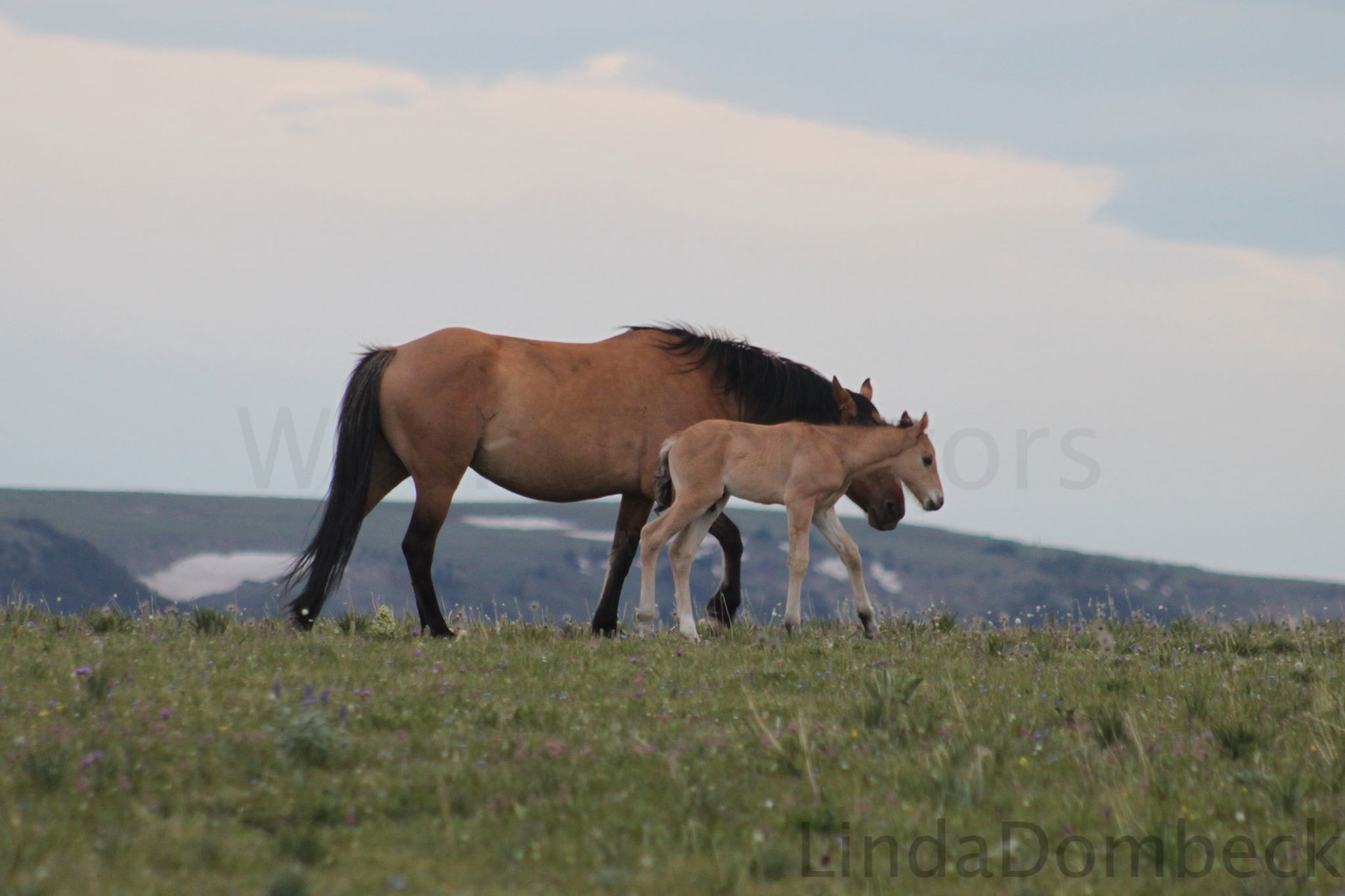 Fools Gold and her new foal.  Photo by Linda Dombeck