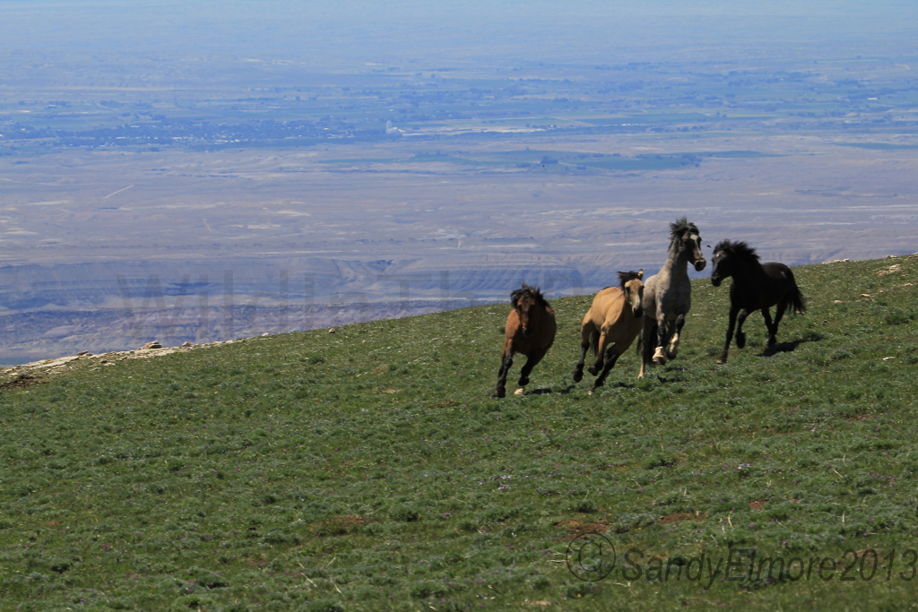 Horizon, Juniper, Fiesta and Morning Star