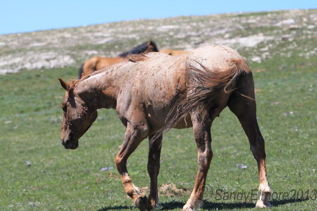 Tecumseh, June 16, 2013