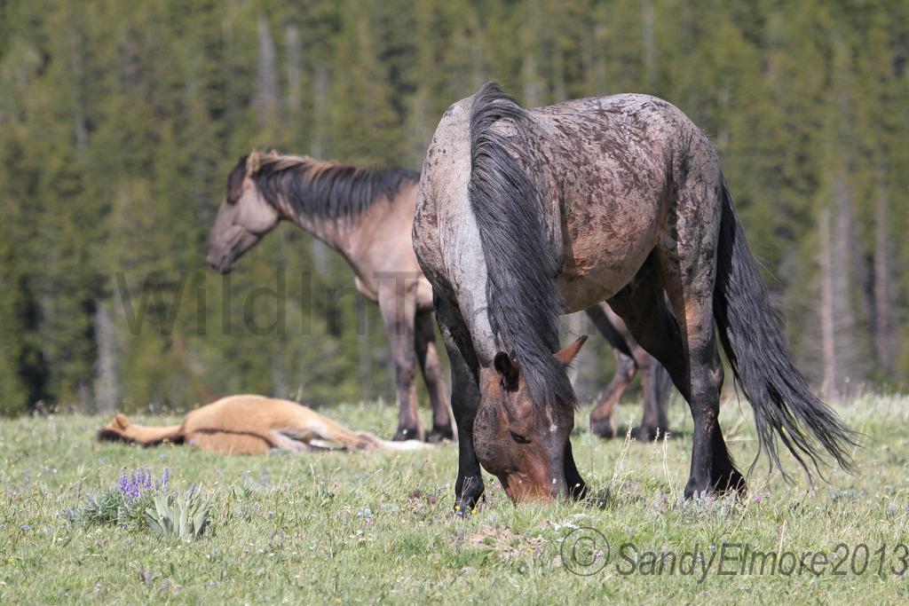 Custer, Fiasco and Nodin