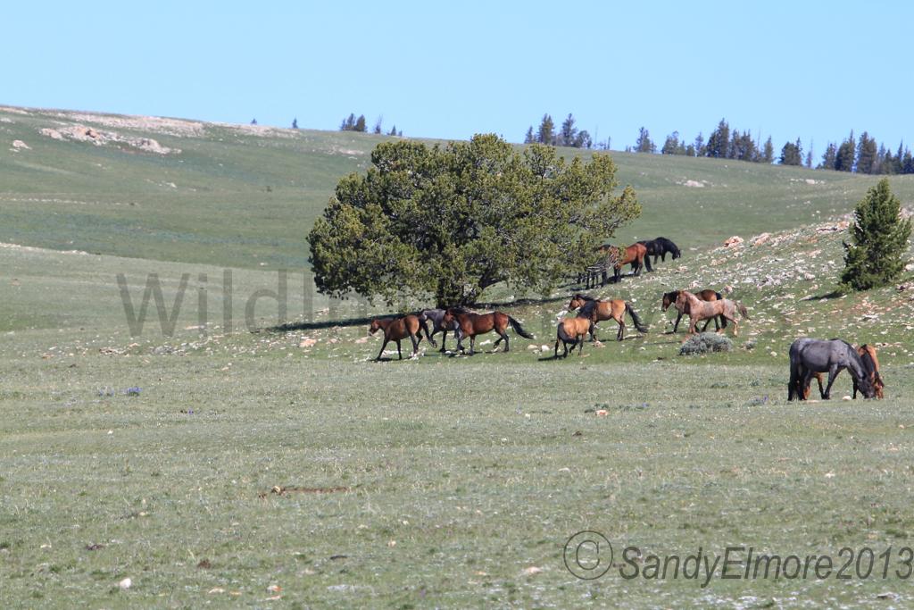 Horizon, Fiesta and Tecumseh