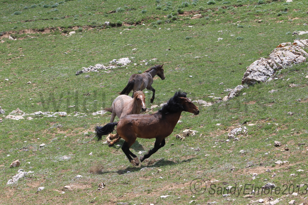 Coronado chasing Santa Fe away from Manuelita