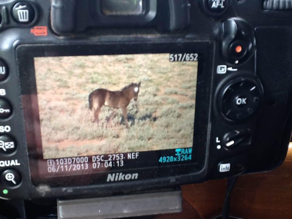 Greta and Garcia's foal.  Photo by Shawn Ivie.