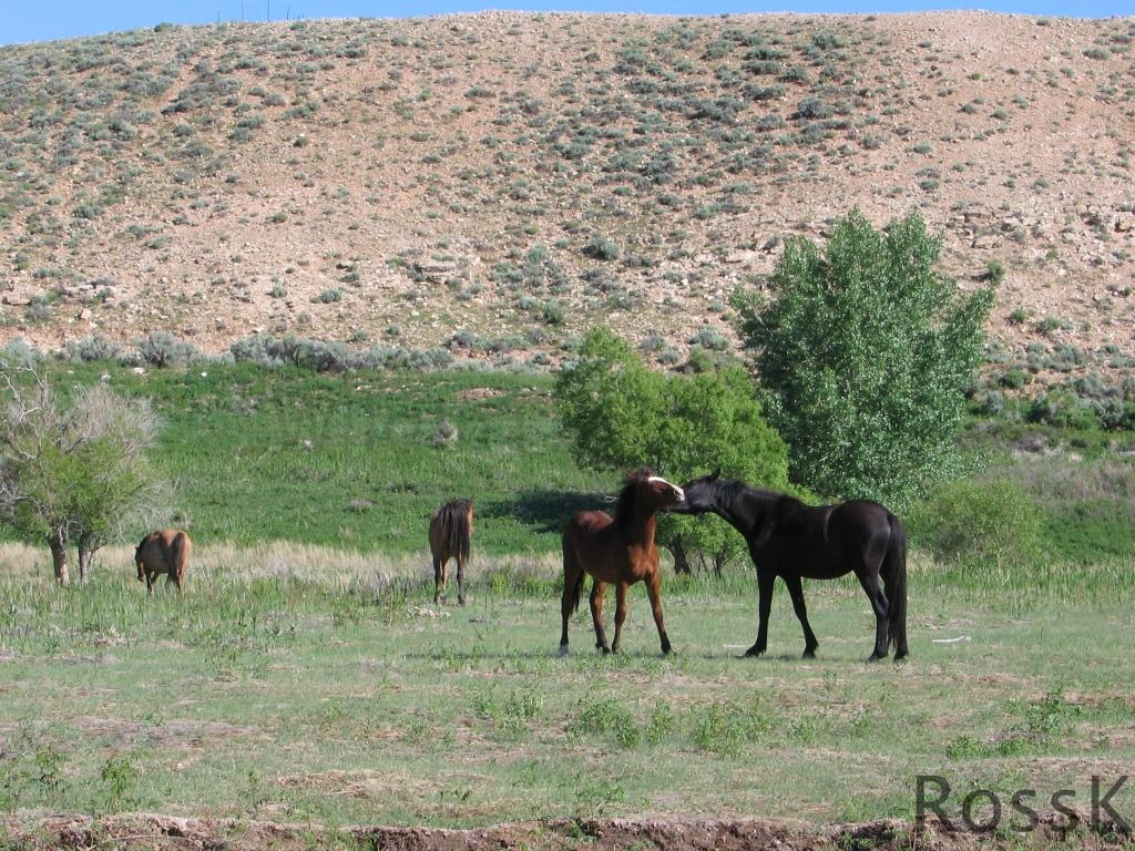 Pryor Mt1_June 10 '05