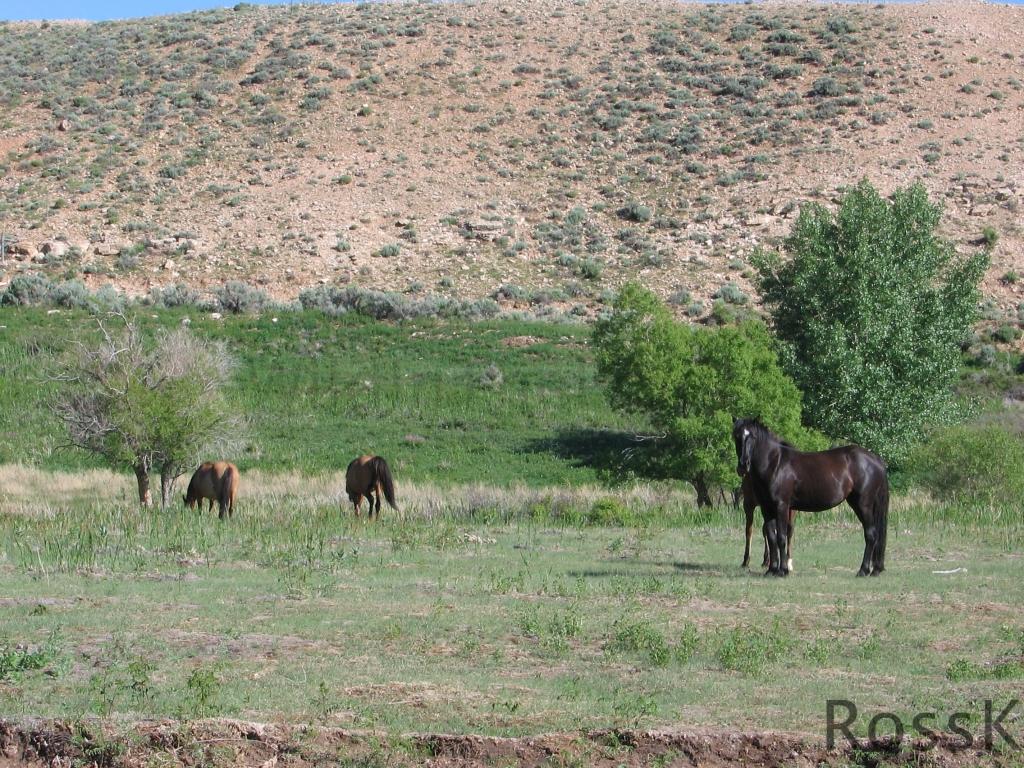 Pryor Mt2_June 10 '05