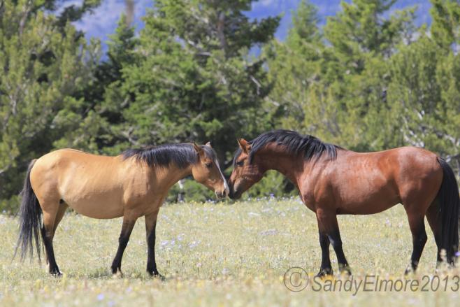 Duke flirts with Sequoyah
