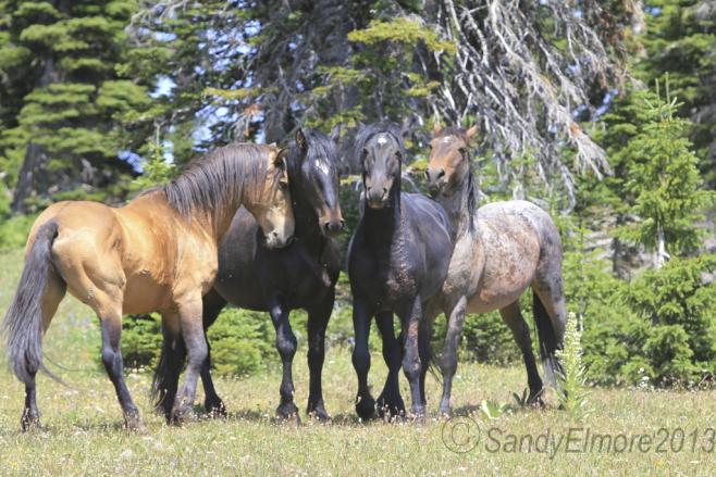 Chino, Grijala, Jasper and Custer