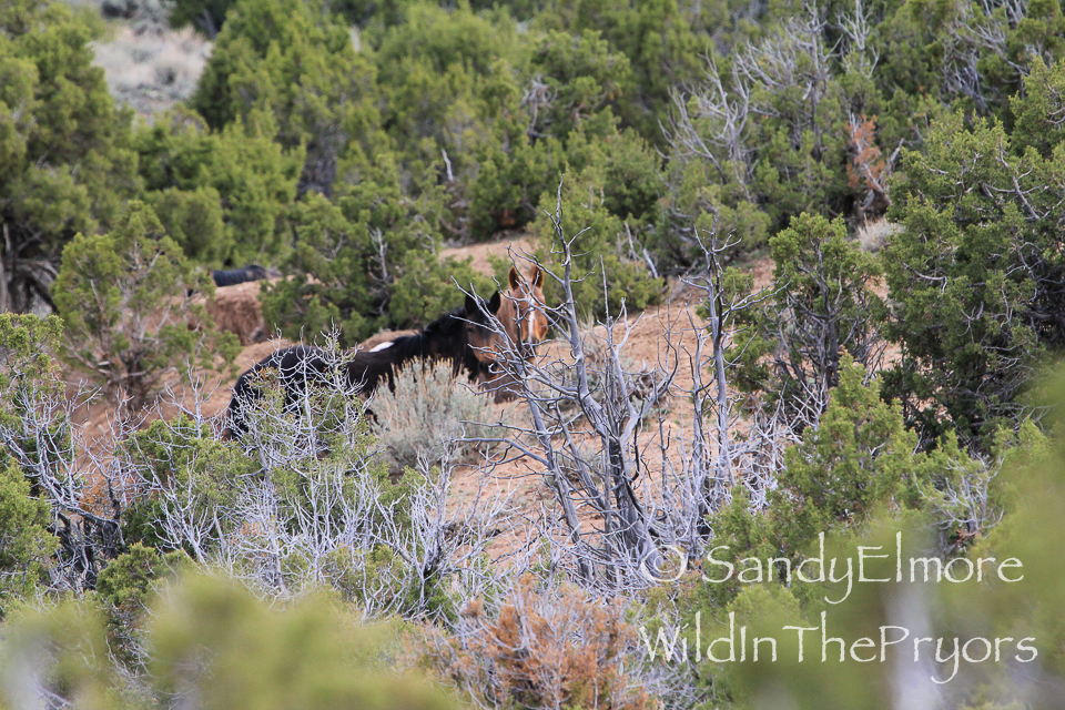 Galadrial and Tecumseh, April 25, 2014