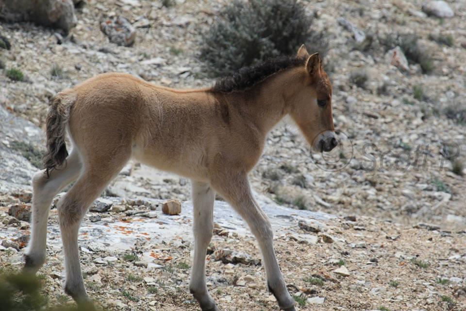 Fiasco and Custer's foal