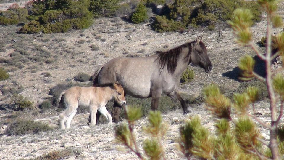 Fresia and her new foal.