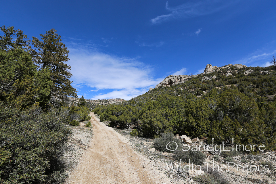 Couger Canyon Area