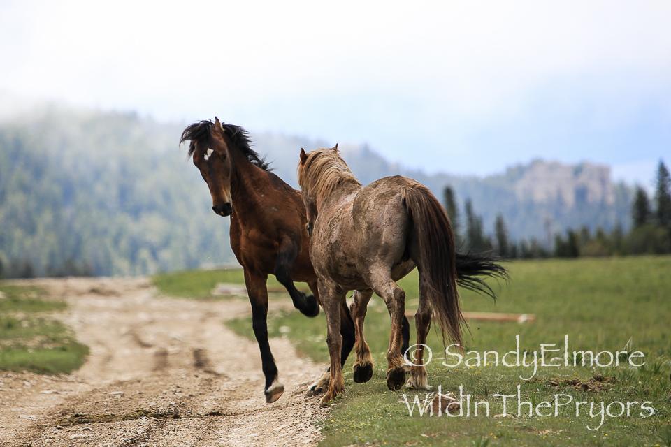 Santa Fe and Coronado