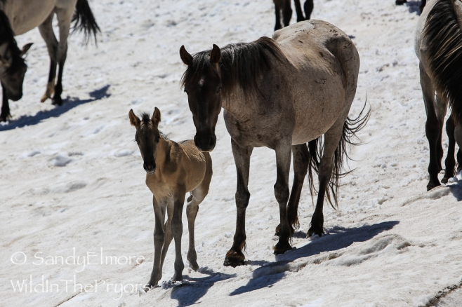 Halcyon and her new filly. July 2, 2014