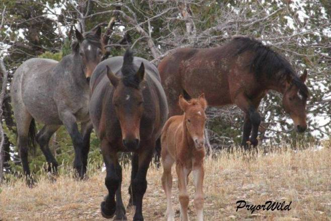 Galadrial and her new foal.  Photo by Steve Cerroni.