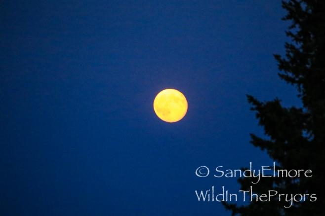 Full Moon, August 2014