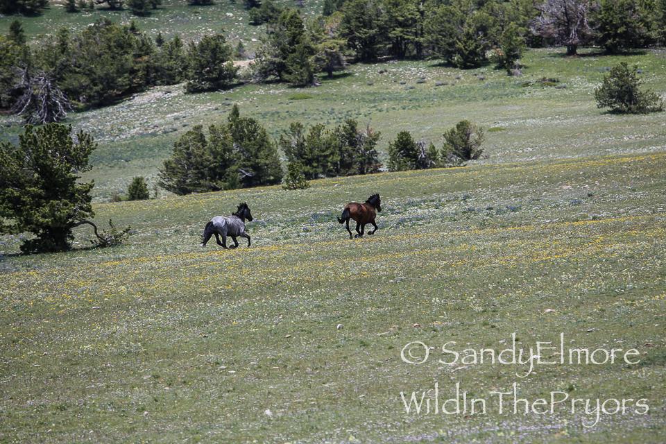 Irial chases Santa Fe