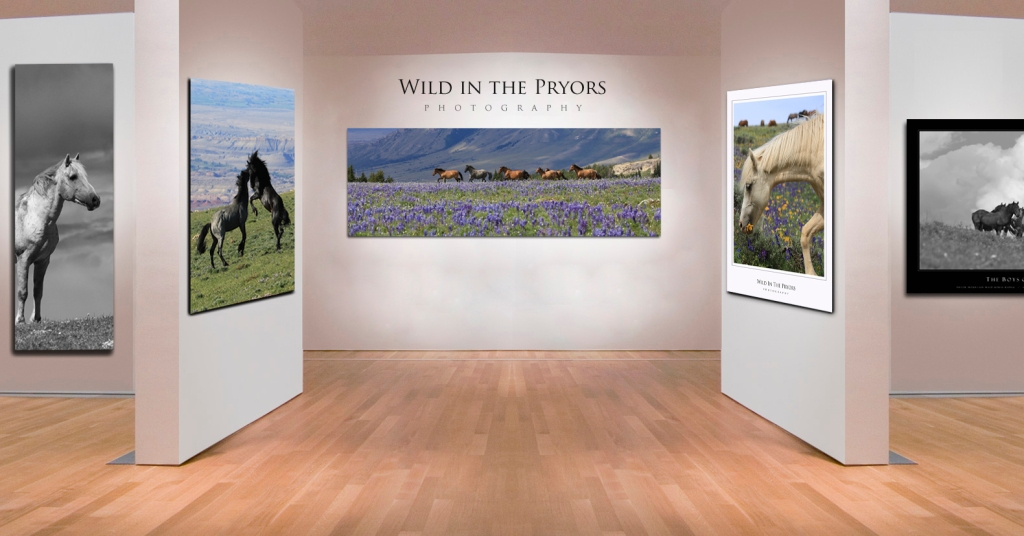 Wild_in_the_Pryors_Exhibit