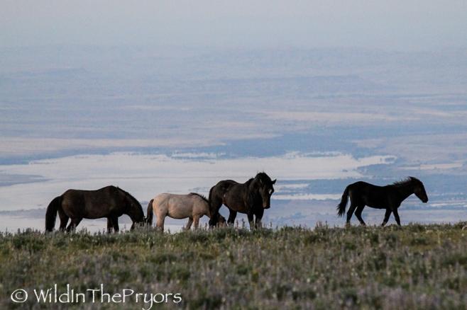 Lakota, Knight, Grijala and Kohl, July 2011