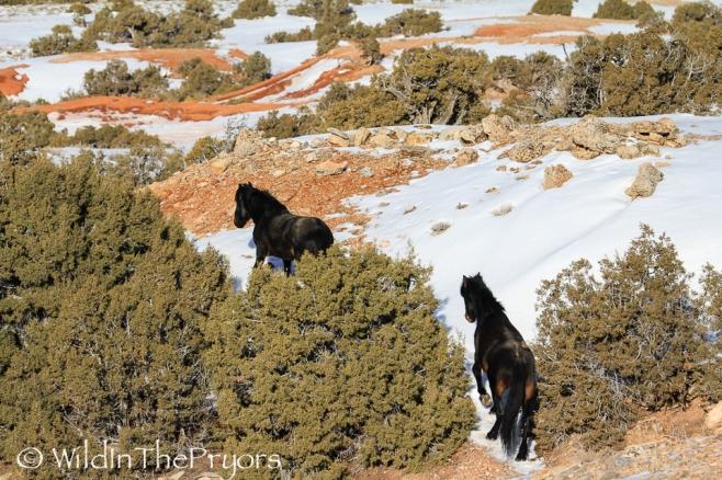 Jasper and Grijala, February 2014