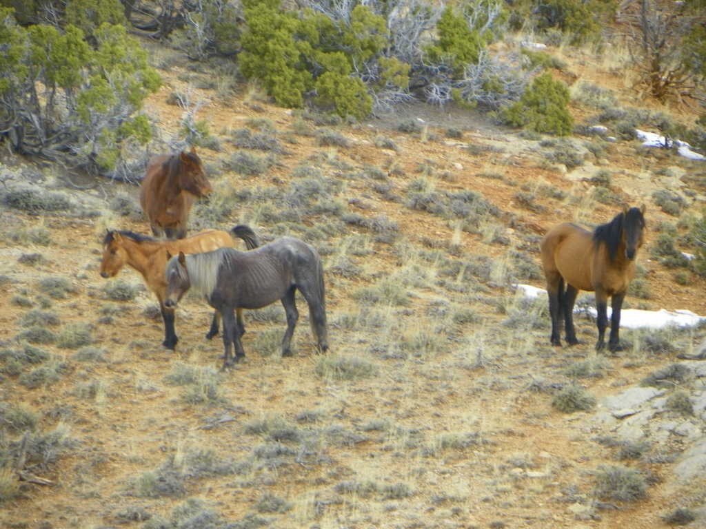 From Left to Right:  Firestorm and Okomi with Hertiage and Jackson on the right.  Photo taken by Jack Sterling on February 7, 2015