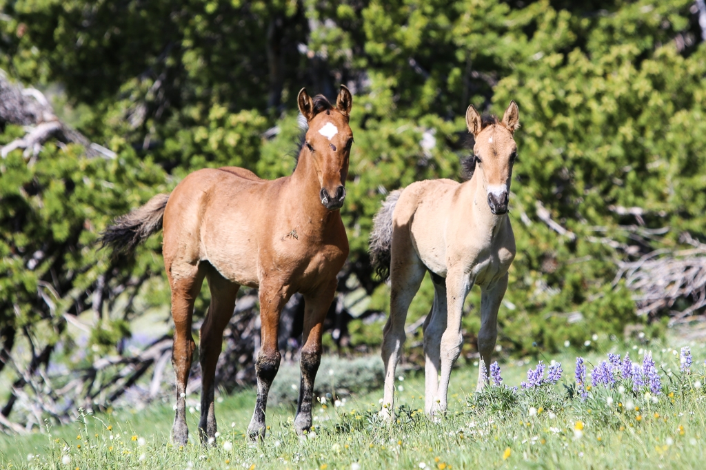 2014 foals,  July 2014