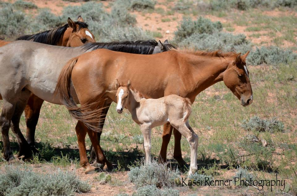 Nova with her new little filly, Prima.  Photo by Kassi Renner