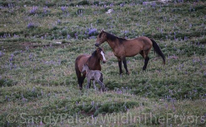 Chino, Jacinta and Patriot, July 4, 2015